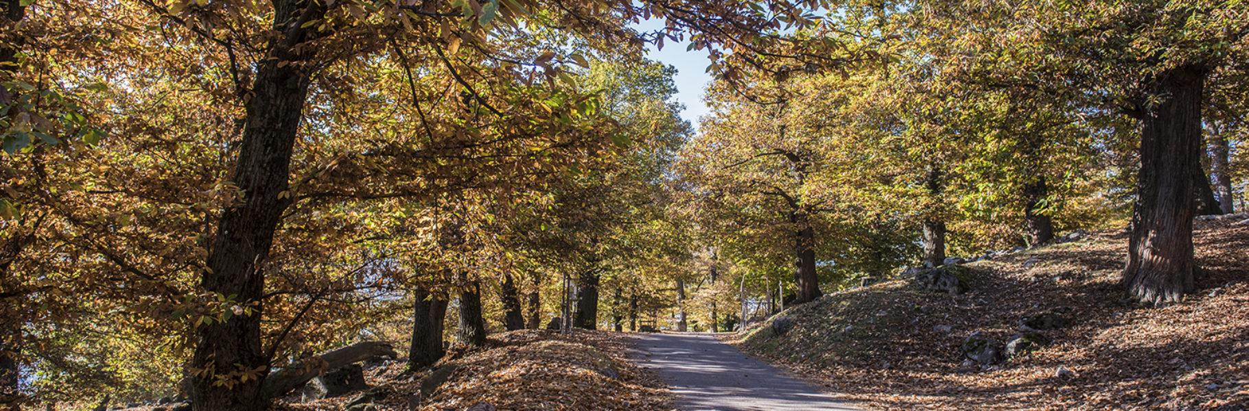 Sur le sentier à l'automne 2016.